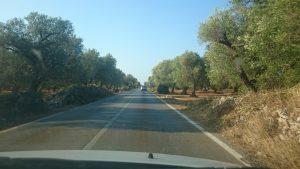 olive farm 2